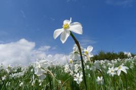 Narciso: elogio della bellezza
