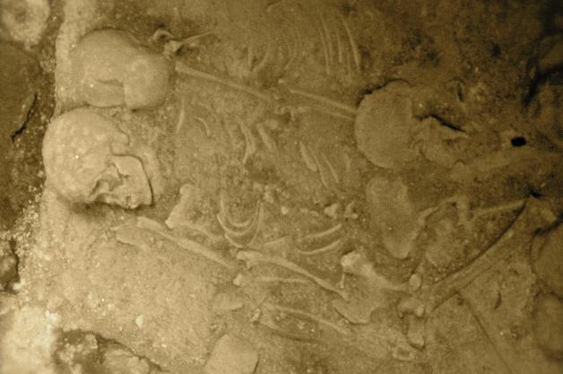 Scheletri fossili